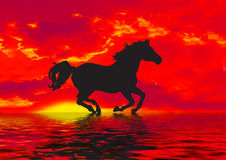 Red Horse Silhouette  Royalty Free Stock Images