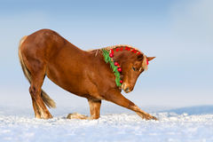Red horse in snow Royalty Free Stock Photo
