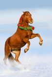 Red horse in snow Stock Photo