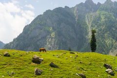 Red horse at Sonamarg in summer, Srinagar, Jammu Kashmir, India. Asia Royalty Free Stock Images