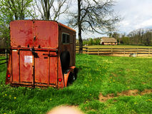 Red horse trailer in a field. Red horse trailer green grass with fence Royalty Free Stock Image