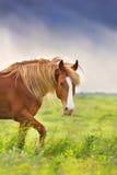 Red horse walk Royalty Free Stock Photos