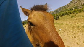 Red horses in the mountains of the Crimea in the summer stock footage
