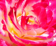 Red hot. Sensual rose abstract Stock Photo