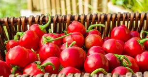 Red hot cherry peppers in basket Stock Image