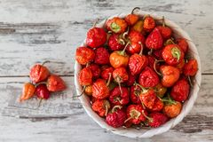 Red Hot Cherry Peppers Stock Photography