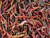Red hot chili. This pungent pod plays an important role in the cuisines of many countries Stock Images