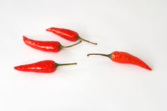 Red hot chili royalty free stock image