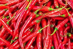 Red hot chili arrange in a row Royalty Free Stock Photos