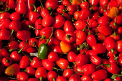 Red Hot Chili Stock Photos