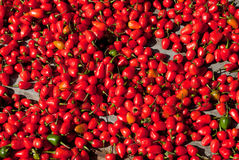 Red Hot Chili Royalty Free Stock Photography