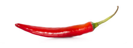 Red hot chili pepper. On a white background royalty free stock photography