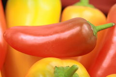 Red hot chili pepper Stock Photos