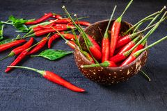Red Hot Chili Pepper On black wood floor stock photo