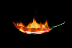 Red hot chili pepper burns in fire. On black background Royalty Free Stock Photography