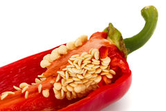 Red hot chili pepper closeup, isolated on white background Stock Image