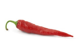 Red hot chili pepper in drops of water Royalty Free Stock Photography