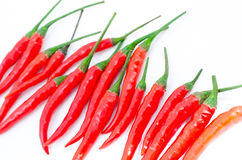 Red hot chili pepper group. Isolated on white background Royalty Free Stock Images