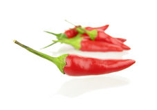 Red hot chili pepper isolated on white background Royalty Free Stock Photo