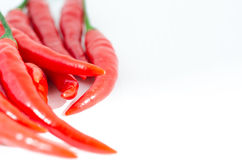Red hot chili pepper. Isolated on white background Royalty Free Stock Image