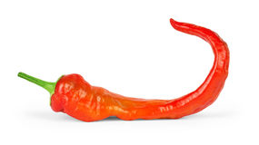 Red hot chili pepper isolated on a white background Royalty Free Stock Image