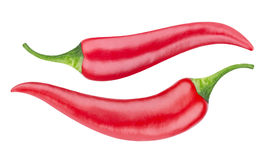 Red hot chili pepper isolated on white background. With clipping path Royalty Free Stock Photography