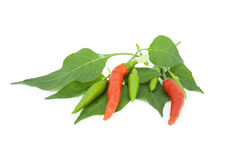 Red hot chili pepper isolated on white background Royalty Free Stock Images