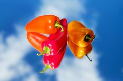 Red Hot Chili Pepper Near Orange Pepper Stock Photo