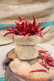 Red hot chili Stock Photography