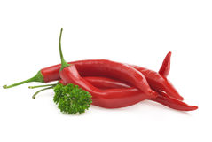 Red hot chili pepper and parsley Royalty Free Stock Image