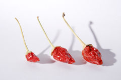 Red hot chili peppers. On white background Stock Photos