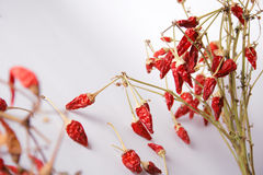 Red hot chili peppers. Bunch of dried red hot chili pepper on white background Royalty Free Stock Photography
