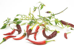 Red Hot Chili Peppers. On white background Royalty Free Stock Image