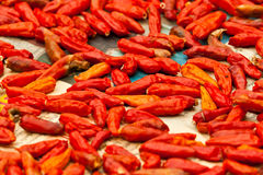 Red hot chili peppers. In thailand Royalty Free Stock Photo