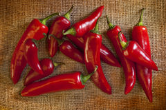 Red Hot Chili Peppers. Chili peppers originated in the Americas, but have now spread across the world, being used as both food and medicine Royalty Free Stock Photography