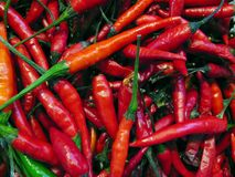Red hot chili peppers. Close-up Stock Photo