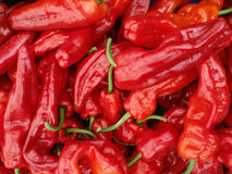 Red hot chili peppers displayed Stock Images