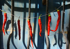 Red Hot Chili Peppers. Dried on the window Stock Photo