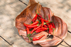 Red hot chili peppers on Dry leaf background. Spicy chilli peppe Stock Photo