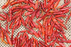 Red hot chili peppers drying Stock Photography