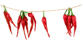 Red hot chili peppers hanging on a three ropes isolated on the w Stock Photos