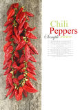 Red hot chili peppers hanging on wood Stock Photography