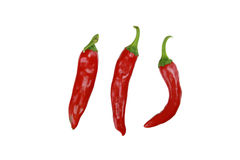 Red Hot Chili Peppers isolated on white stock photography