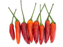 Red hot chili peppers isolated on white. Stock Images