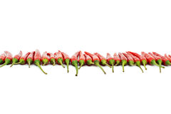 Red hot chili peppers line. Red hot chili peppers border line isolated Royalty Free Stock Image