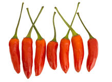 Red hot chili peppers in a line, isolated on white. Stock Photos