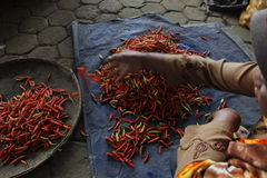 Red hot chili. In the traditional markets slopes of Mount Merapi, Central Java, Indonesia Royalty Free Stock Photography