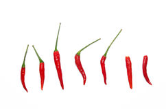 Red hot Chilies on white background Royalty Free Stock Photos