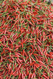 Red, hot chilipepper Stock Image