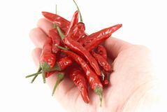 Red hot chilli Stock Photos
